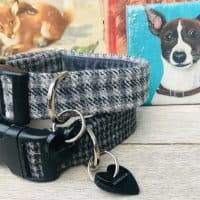 Scrufts Billy Boy and Charlie Boy Grey Tweed Dog Collars with Velvet Lining