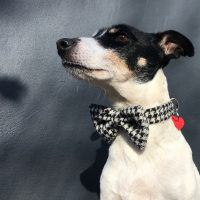 Scrufts Mono Harris Tweed Bow Tie Dog Collar