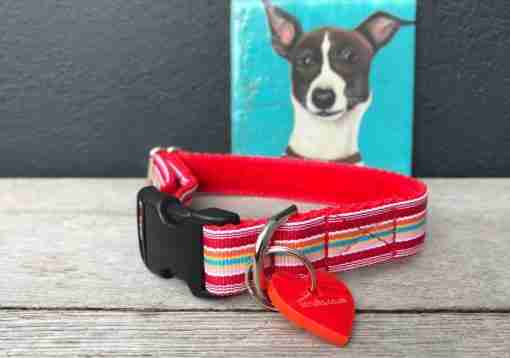 Scrufts Raspberry Ripple Red Striped Dog Collar With Velvet Lining
