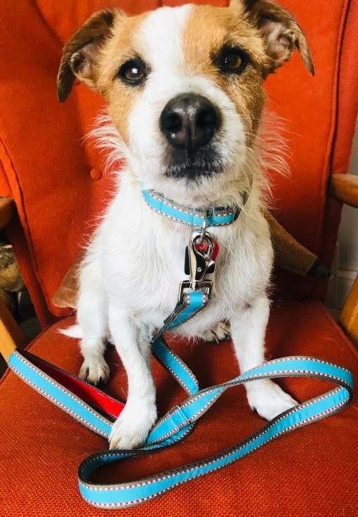 Scrufts Little Elmer Turquoise Dog Collar and Lead with Red Velvet Lining