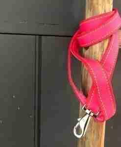 Scrufts Strawberry Summer Pink Striped Dog Lead