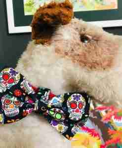 Scrufts Old Bonehead Skull Candy Dog Bow Tie