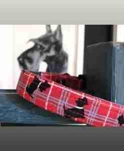 Scrufts' Scottish Terrier/Scottie Dog Collar