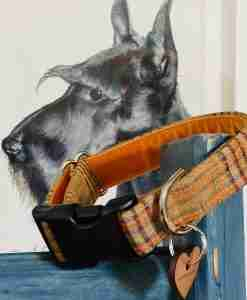Scrufts Panama Checked Linen Velvet Lined Dog Collar