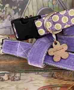 Scrufts' Lily Apple Violet and Lime Polka Dot Dog Collar and Violet Velvet Dog Lead